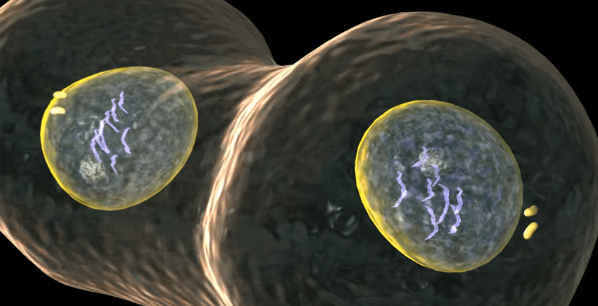 Cell Division Mitosis 3D Animation